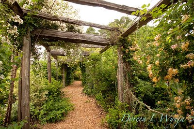 Arbor Pathway_3539 copy