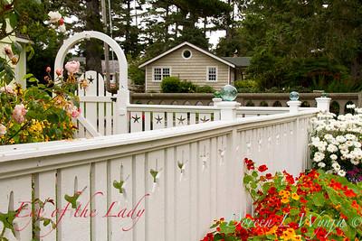 Fencing white Tropaeolum majus cottage garden_3647L