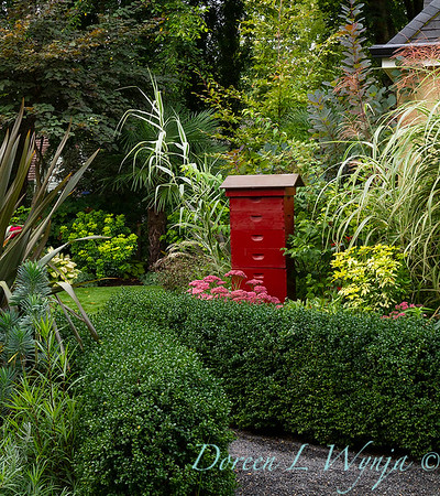 Buxus microphylla japonica 'Green Beauty' formal border - bee keeping bee boxes_5212
