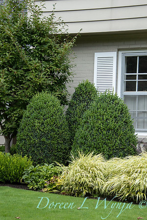 Buxus sempervirens 'Rotundifolia' traditional landscape_3115