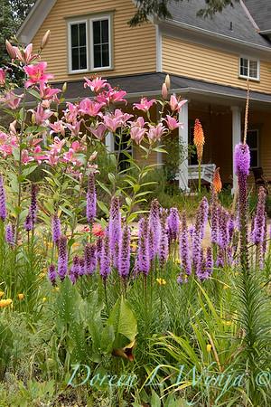 Liatris spicata cottage landscape_5270