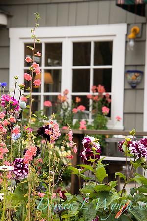 cottage garden - Dahlia_3511