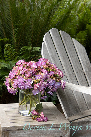 43342 Hydrangea macrophylla Seaside Serenade 'Crystal Cove' cut flowers outdoor living_6797
