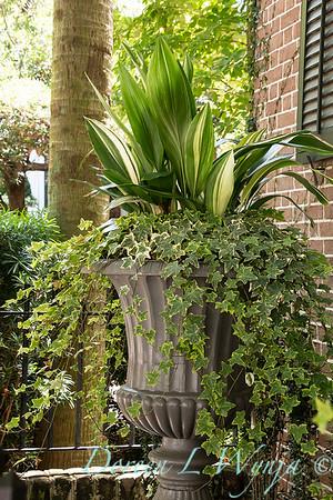 Aspidistra elatior 'Variegata' - Hedera - Cast iron planter - Formal garden - ivy_1288