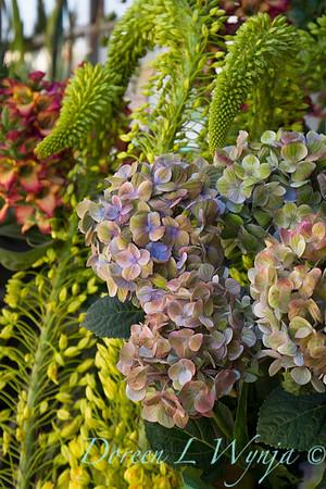 Hydrangea macrophylla_2400