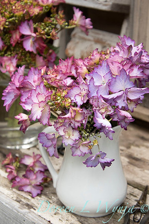43342 Hydrangea macrophylla Seaside Serenade 'Crystal Cove' cut flowers on potting bench_6785