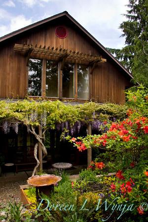 Wisteria floribunda Texas Purple_050
