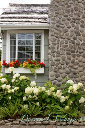 Hydrangea Tropaeolum window box_3920