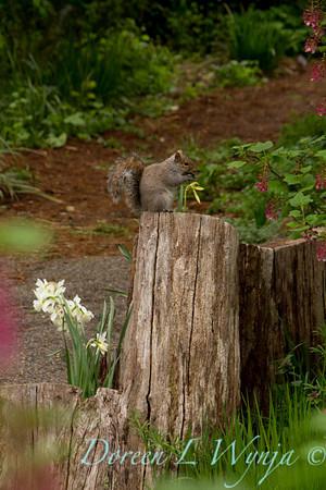 squirrel_7831