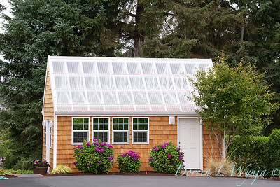 Shingled potting shed - Hydrangea_4613