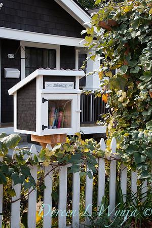 Neighborhood book box - Vitis vinifera arbor_6389