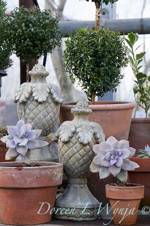 French garden finial - Graptoveria acaulis- topiary_0592