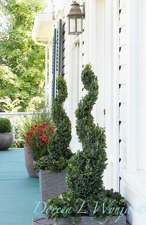 1390 Buxus sempervirens 'Monrue' - 189 Ajuga reptans 'Bronze Beauty' - topiary front porch_6930