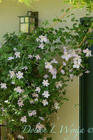 Clematis front door_0643