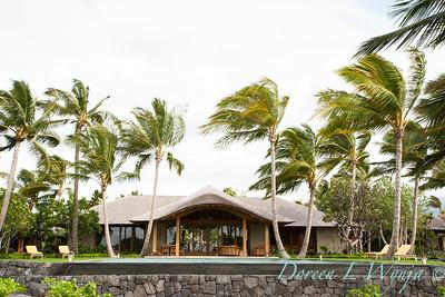 Cocos neucifera - outdoor living_097