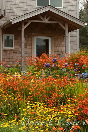 Chrysanthemum Crocosmia meadow_011