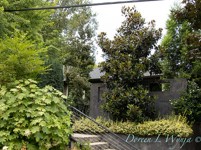Magnolia grandiflora 'Kay Parris' - Hydrangea quercifolia 'Brido' Snowflake - Euonymus fortunei 'Monce' Golden Prince planter_3248