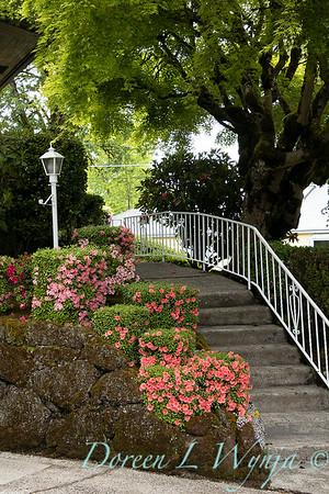 cubed Azalea collection - stone wall - garden steps_3065