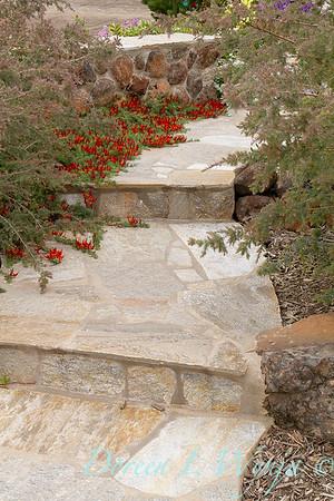 Lotus berthelotii edged steps_1439