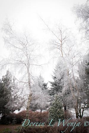 Monrovia winter frost landscape_9285