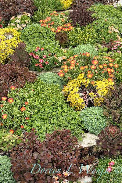 Succulent garden_2595