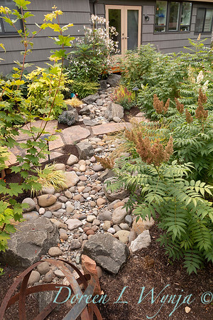dry rock bed - Sorbaria sorbifolia 'Sem'_9374