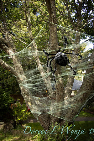 Halloween spider web in a tree_7494