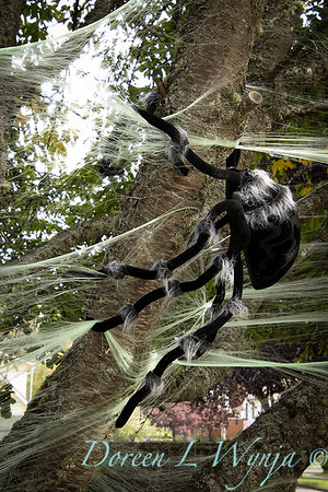 Halloween spider web in a tree_7496