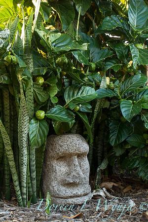 Morinda citrifolia - Sansevieria trifasciata - tiki head_0628