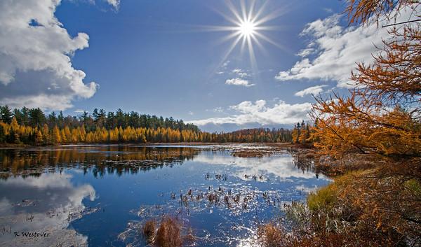 Autumn sun over the bog.