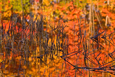 Reflections of Fall Colors at the Marsh