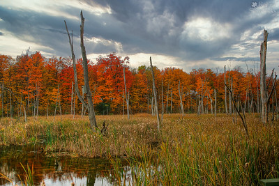 Fall at the Ile Bizard Marsh