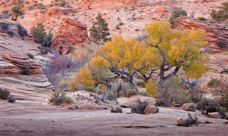 Autumn in Zion
