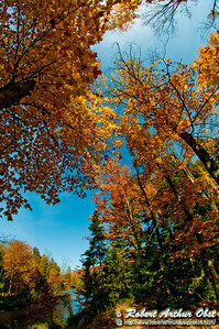 Blazing autumn hardwoods umbrella the wild Wolf River along the legendary Old Military Road at Military Park (USA WI Lily)