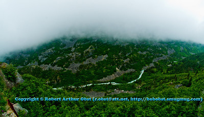 Fog envelops the boreal forest canyon of Skagway River tributary along the White Pass railway between Skagway Alaska and White Pass near the USA Canada border (USA Alaska Skagway)