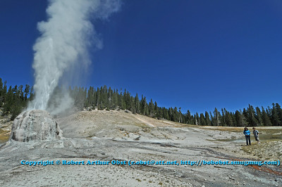 Lone Star Geyser erupting under cerulean skies in Yellowstone National Park (USA WY)