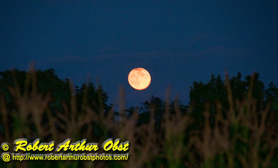Harvest Full Moon rising in Cobalt Skies over woodlands and corn fields near wild Wolf River (USA WI White Lake)