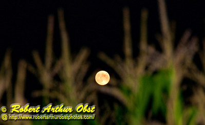 Harvest Full Moon rising in Black Skies over woodlands and corn fields near wild Wolf River (USA WI White Lake)