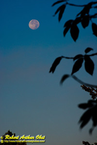Close up of moonset over the Wolf River Refuge and the wild Wolf River (USA WI Langlade)