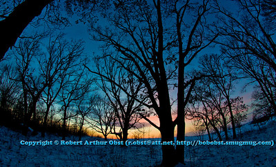 Cross country skier's view of intricate branches of an Oak woods during winter evening sunset within Governor Nelson State Park (USA WI Middleton; Obst FAV Photos 2013 Nikon D800 Image 7392)