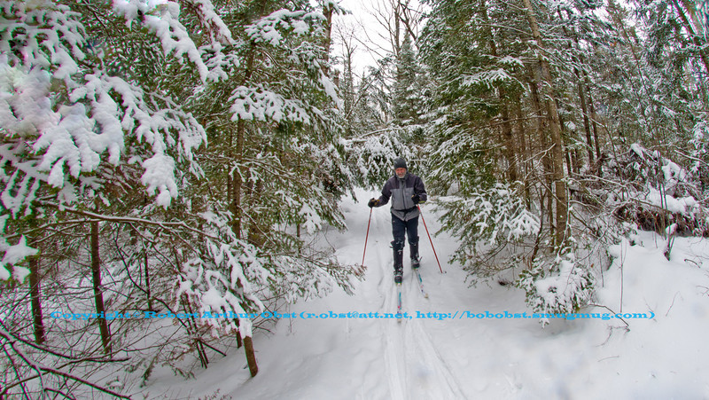 Cross country skiers view of a snowy winter wonderland over pine forests along the East Loop Trail within the Jones Springs Management Area of the Nicolet National Forest (USA WI Townsend; Obst FAV Photos 2013 Nikon D800 Landscapes Inspirational Winter Beauty Image 7699)