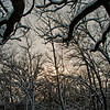 Cross Country skiers view of a snowy oak woods within Governor Nelson State Park (USA WI Waunakee; Obst FAV Photos 2013 Nikon D300s Landscapes Inspirational Winter Beauty 4510)