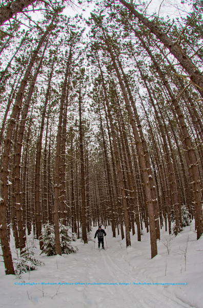 Cross country skiing on the East Loop Trail through a Red Pine or Pinus resinosa plantation within the Jones Springs Management Area of the Nicolet National Forest (USA WI Townsend; Obst FAV Photos 2013 Nikon D800 Landscapes Inspirational Winter Beauty Image 7693)