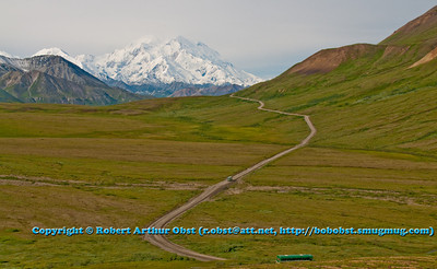 Stunning snowy Denali or Mount McKinley during July from Denali Park Road within Denali National Park (USA Alaska Denali Park)