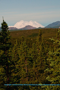 Gorgeous views of Denali or Mount McKinley from Denali Park Road make Denali National Park an unforgettable experience (USA Alaska Denali Park)