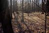 Golden sunlight in the woods