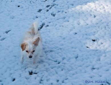 Snow2-4-09-3363