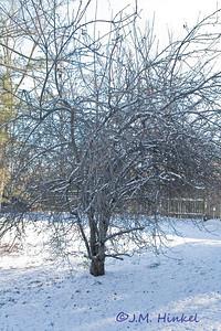 Snow2-4-09-3365