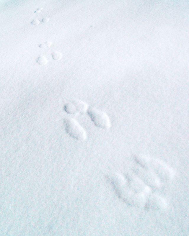 Rabbit Tracks, Logan Canyon, near Logan, Utah<br /> <br /> Recommended Sizes: 4 x 5, 8 x 10, 16 x 20