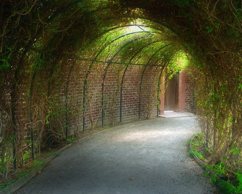 Living Tunnel<br /> <br /> Recommended Sizes: 4 x 5, 8 x 10, 16 x 20